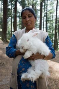 Rabbit Woman