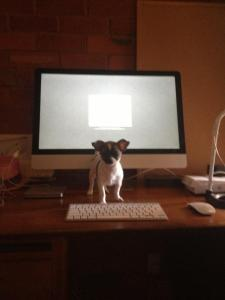 Smallest Dog with Biggest Computer