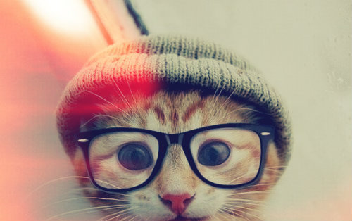 This election campaign is getting depressing. What we need now is a cat in beanie and glasses.