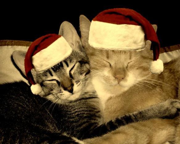 Christmas Cats - Tuija2005